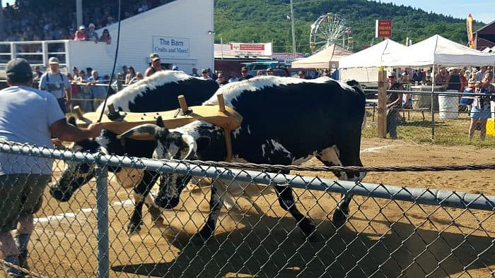 My Father and the Oxen ...and Blueberry-Maple Ice Cream from EricasRecipes.com
